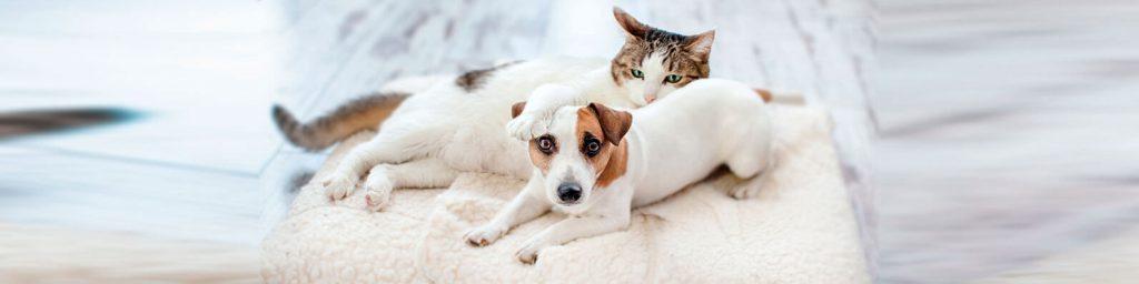 La cuarentena para prevenir la expansión del Covid-19 obliga a algunas familias chilenas a buscar alternativas para entretenerse con sus familias, perros y gatos.