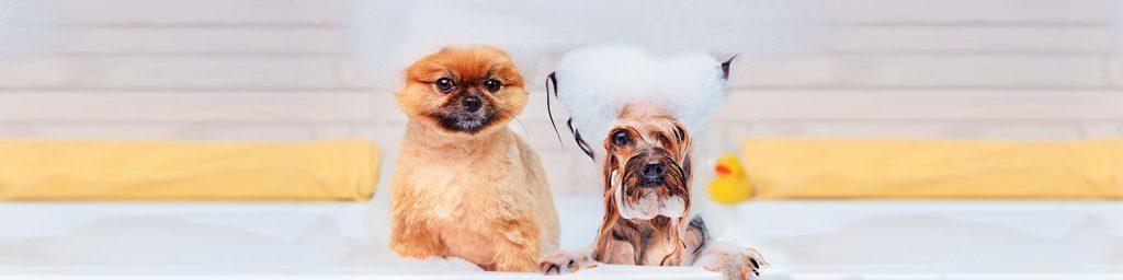 Un buen champú para perros te ayudará a dejar a tu regalón impeque sin tener que salir de casa en esta cuarentena. Conoce la línea de productos Beeps.
